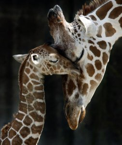 animal_mother_baby (12)